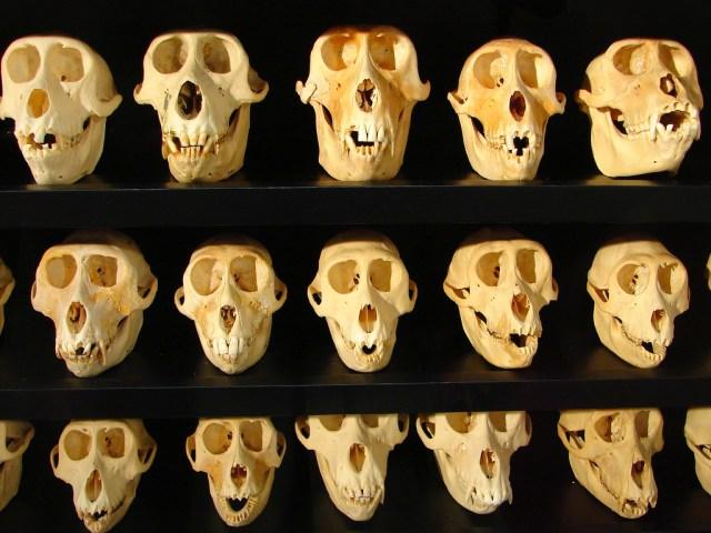 skulls.jpg (468 KB)