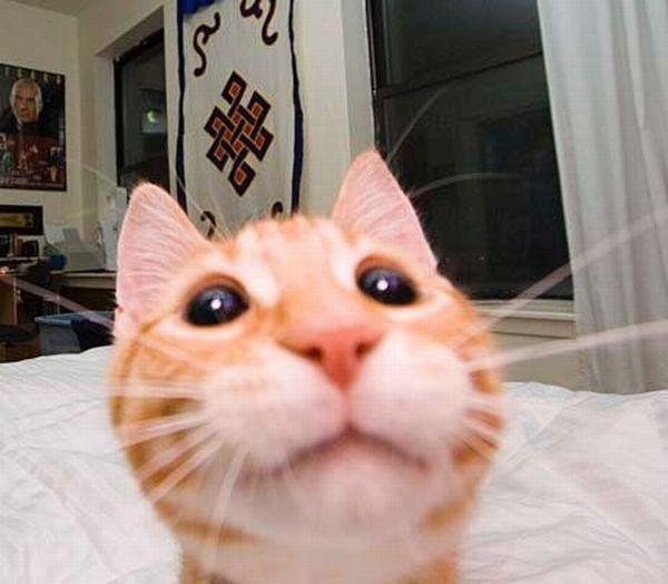 thatfuckingcat.jpg (38 KB)