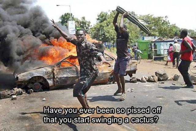 Cactus.jpg (88 KB)