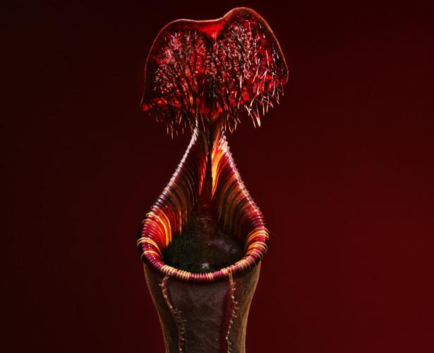 plant-red-615.jpg (82 KB)
