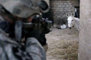 Donkey Jihad.jpg