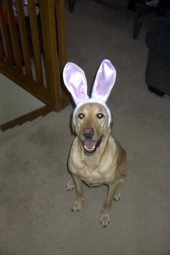 Easter dog.jpg (149 KB)
