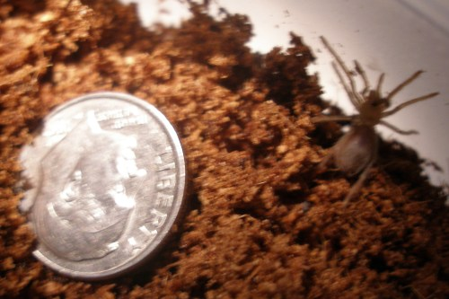 spiderpic2.jpg (944 KB)