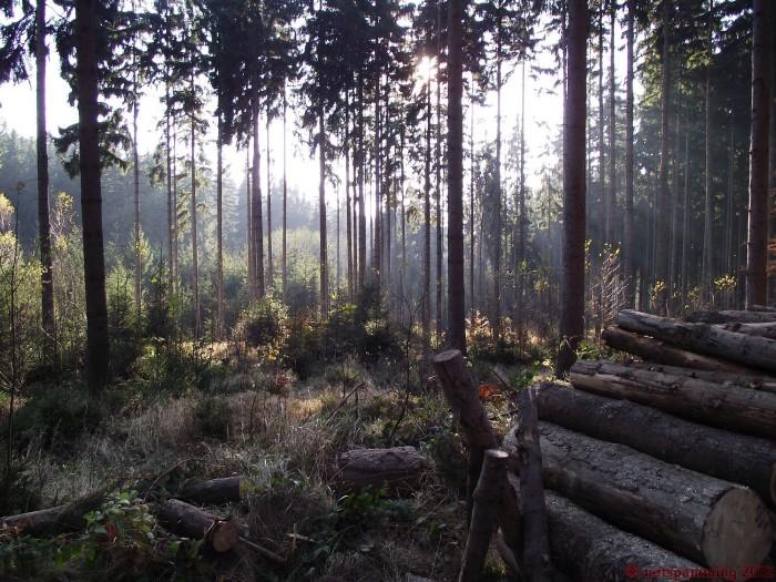 forest3.JPG (818 KB)