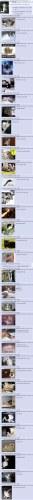 lolcats_metallica_4chan.jpg (595 KB)