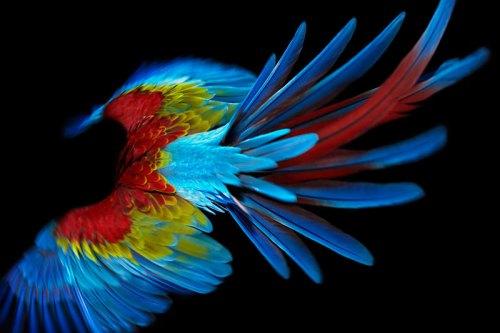 ss_bird_1.jpg (74 KB)