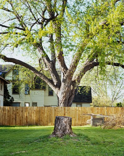 levitating-tree.jpg (356 KB)