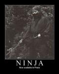 ninja-pirate-motivational.jpg