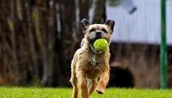 Yorkie Names 135 Sweet Sassy Ideas My Dogs Name