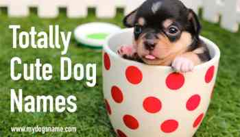 225+ Cool Dog Names & Awesome Ways to Find More! - My Dog's Name