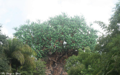 My Dreams of Disney, Tree of Life, Animal Kingdom