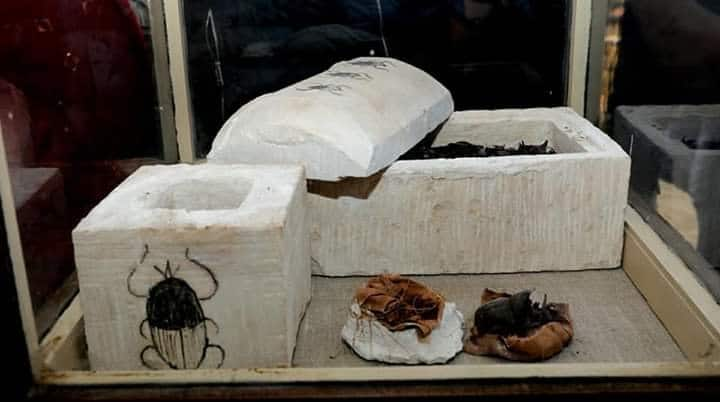 Tomb Full of Sacred Cats and Beetles Found in Sakkara 10
