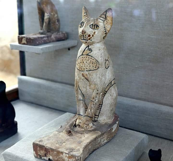 Tomb Full of Sacred Cats and Beetles Found in Sakkara 9