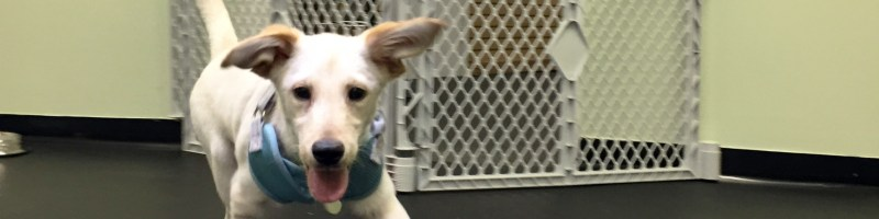 Columbia, Ellicott City, Howard County Dog Training