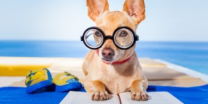 Dog training classes in Howard County Maryland