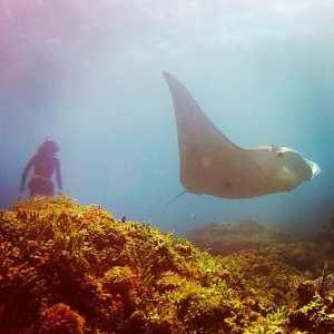 manta ray stradbroke island