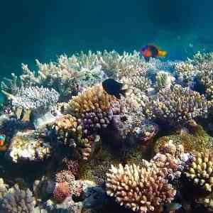 lifou jinek aquarium naturel