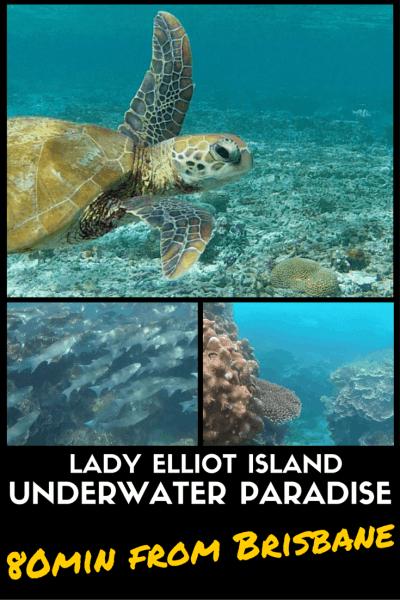 Lady Elliot Island UNDERWATER PARADISE