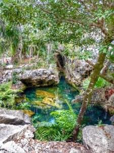 Best Cenotes for Snorkelling in Tulum (Mexico) - Garden of Eden Cenote