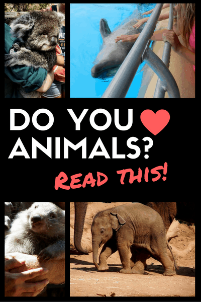 love-animals-how-to-choose-tourist-activities