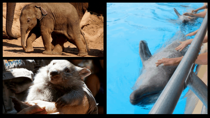 animals-tourism-activities-bad-or-good