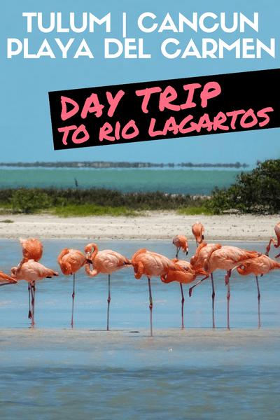 Day trip from TULUM - CANCUN PLAYA DEL CARMEN - Rio Lagartos