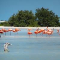 Rio Lagartos: How to See Flamingos and the Pink Lake of Las Coloradas