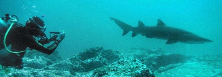 South West Rocks - Grey Nurse Shark pano 01