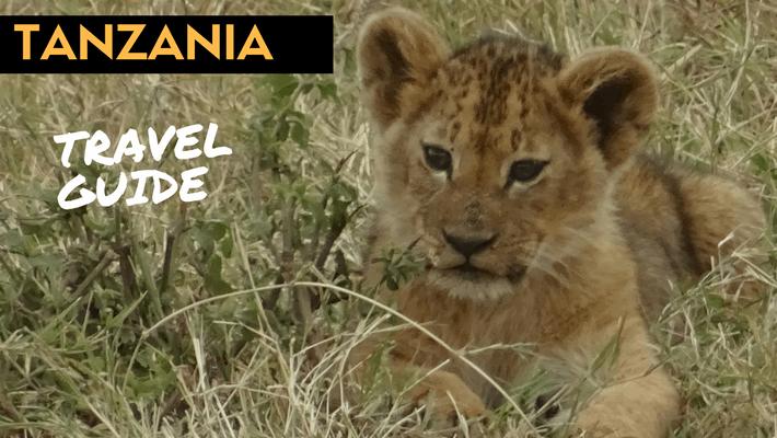 Lion Cub during a Safari - Tanzania Travel Guide