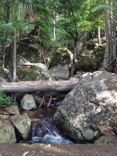 Mt Tamborine Waterfalls - Witches Falls Circuit
