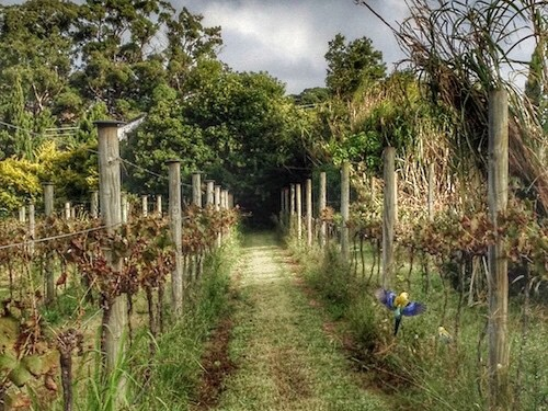 Mt Tamborine Winery - Witches Falls - Gardens with bird