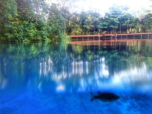 Fish at Nanda Blue Hole Santo Vanuatu