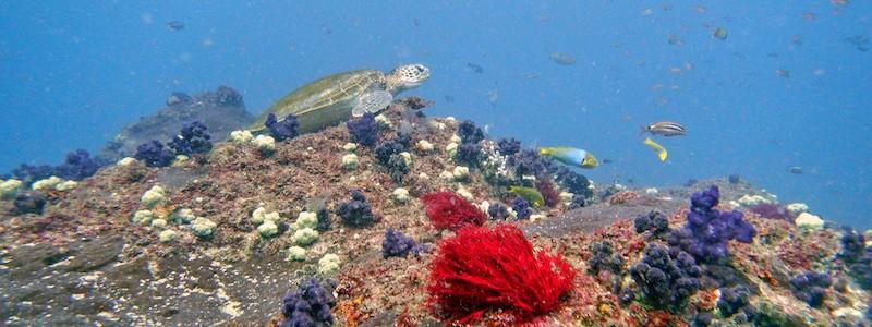 Diving Cherubs Cave Turtle