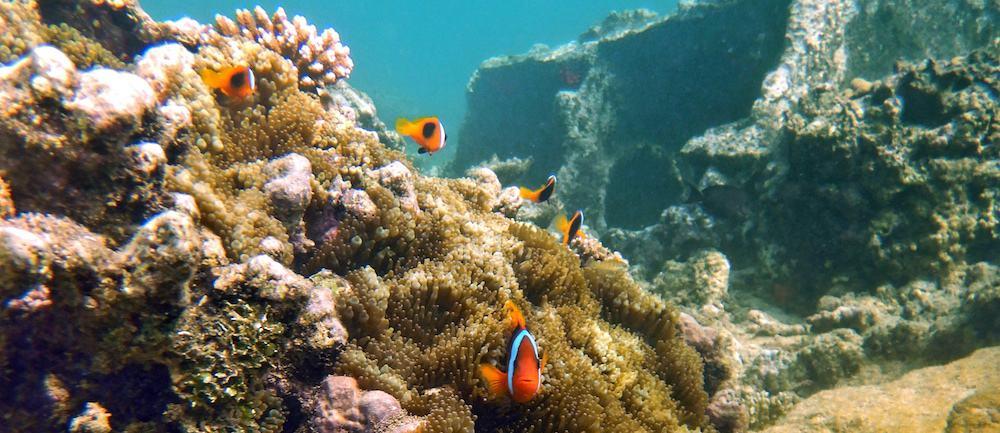 Espiritu Santo Snorkelling Million Dollar Point Vanuatu