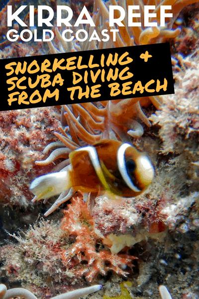 Gold Coast Shore Dive and Snorkel - Kirra Reef