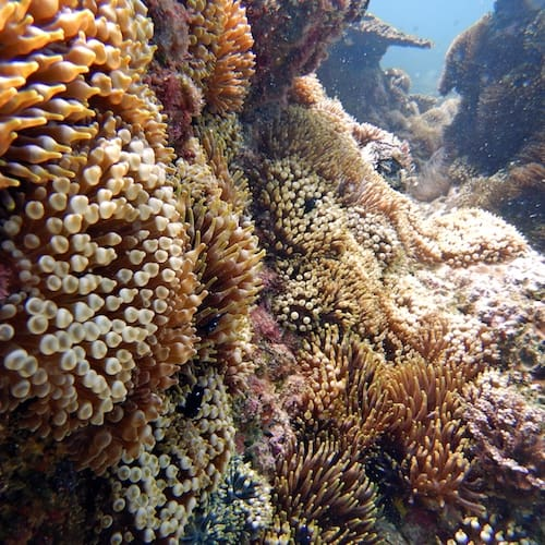 Anemone Bay Solitary Islands Scuba Diving