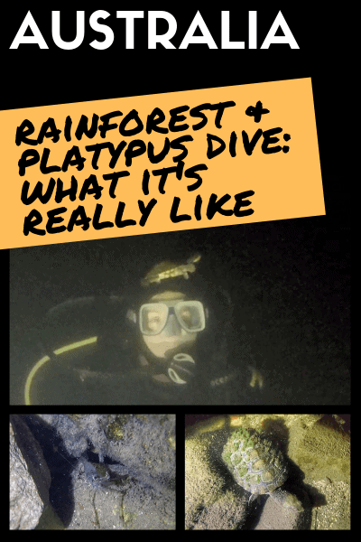 Rainforest-scuba-diving-mackay-what-it-is-like