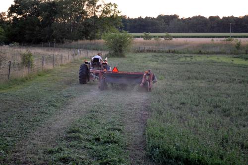 dusty clover hay