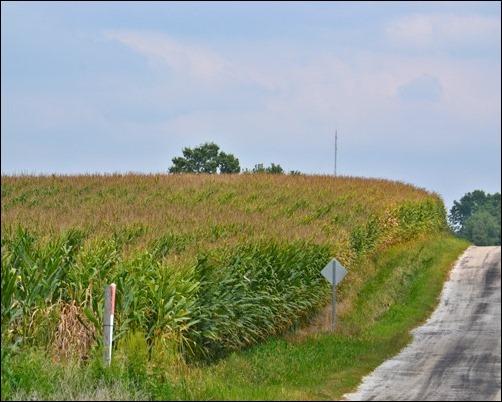 corn field 081813
