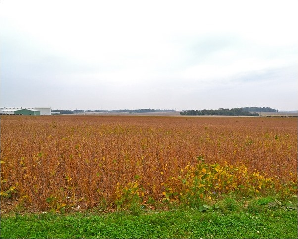 double crop soybean field Oct 15 2013