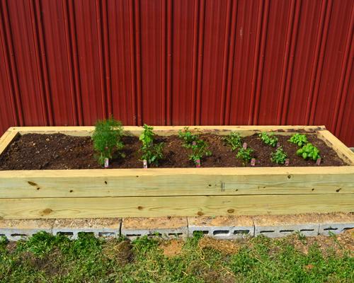 planted herb garden