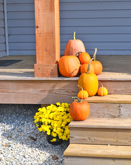 cluster of pumpkins for fall decorations