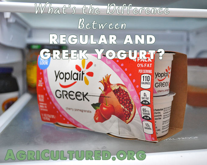 The big difference between regular and Greek yogurt is how many time it is strained. There are also some nutritional differences.