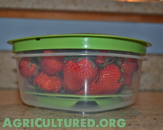 When possible, store fruits and vegetables in their original packaging. These vented Produce Saver containers are another great option.