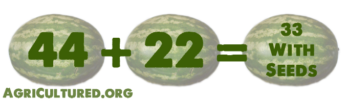 Breeding a watermelon plant that has 44 chromosomes with a watermelon plant that has 22 chromosomes gives you a watermelon plant that has 33 chromosomes. These watermelons will have seeds.