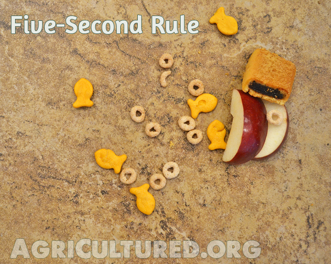 "Do you follow the ""Five-Second Rule""? It sure is handy with a toddler in the house... but just how quickly can bacteria get from the floor to your food?"