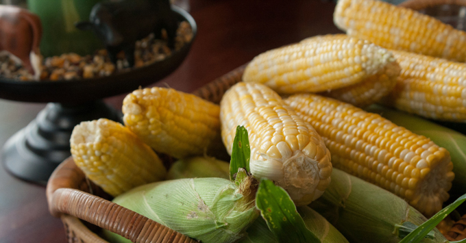 How to Choose Sweet Corn from My Fearless Kitchen. Do you know how to choose the perfect ear of sweet corn every time? Check out our three simple tips and free printable, and you'll never pick a bad one!