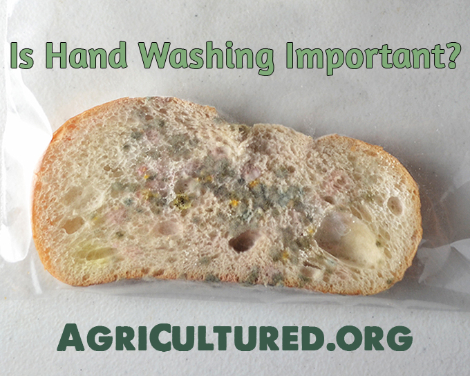 Is hand washing important? You wash your hands to get dirt and bacteria off. When your hands don't look dirty, it's easy to forget about the bacteria you can't see that can make you sick. This experiment will help you visualize how many bacteria can be on your hands, and why hand washing is so important.