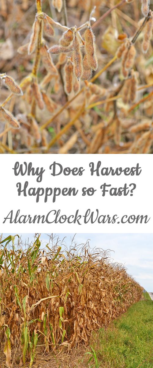 It seems like farmers are in a race to get harvest finished. You might hear about farmers working from dawn until well after sunset - sometimes working 18 hour days or longer - to get their crops harvested. Why does harvest happen so fast?