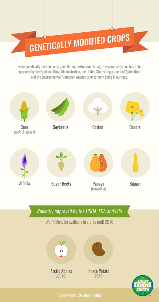 Every genetically modified food (GMO) goes through extensive testing before it is released to be grown and sold. Only 10 foods are available as a GMO version.